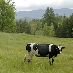 year-round-vermont-attractions