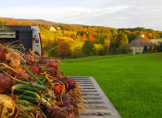 Fall vegetables on a table in front of The Round Barn
